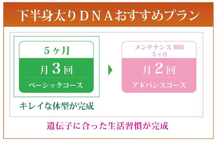 下半身太りDNAおすすめプラン
